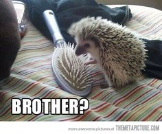 Confused Hedgehog. :). Oh well, love comes in all shapes and sizes, right?!?