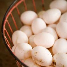 Sałatka z jajkiem i łososiem na trzy sposoby Eggs, Breakfast, Morning Coffee, Egg, Egg As Food
