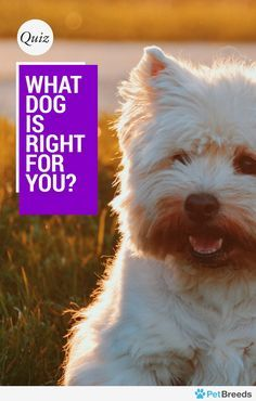 Which Dog Is Right for You? Purchasing a pup is serious business, and PetBreeds gathered the data to figure out which fido-friend is right for you.