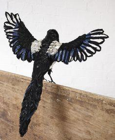 Donya Coward | Birds | Magpie