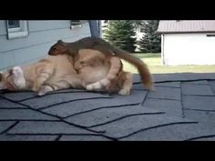 Cat and Squirrel Play Like Old Pals - PawNation