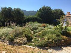 Réalisation et conception d'un jardin sec autour d'une piscine dans un espace naturel