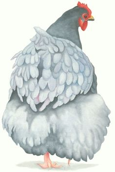 blue orpington chicken painting print (Florence)...I love lizzie Hall prints...she is great!
