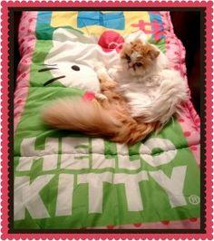 Hello Kitty and Kitty.