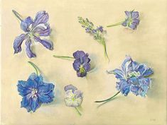 Delphinium, Pansy, Clematis I Egg tempera on gesso panel