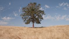 Download this free photo here www.picmelon.com #freestockphoto #freephoto #freebie /// Tree in the Dry Countryside | picmelon