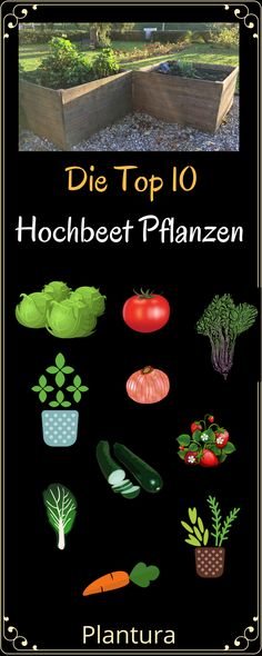 Welche Pflanzen eignen sich am besten für ein Hochbeet? Und welche Vorteile hat… Which plants are best for a raised bed? And what are the advantages of such a raised bed in your own garden? You will learn this at Plantura! Patio Plants, Landscaping Plants, Garden Plants, Indoor Plants, Garden Seeds, Garden Types, Plants For Raised Beds, Raised Garden Beds, Backyard Projects