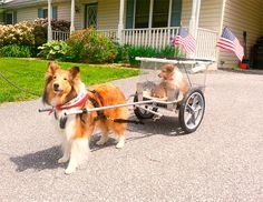 Photo Gallery | 4: CUSTOM DOG CARTS | Manufacturing and selling the finest dog carts for draft dog competition and recreation.