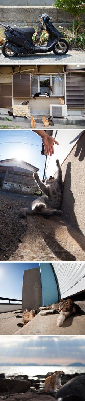 O fotógrafo Fubirai passou os últimos 5 anos documentando as vidas das centenas de gatos que vivem soltos na ilha de Fukuoka, no Japão. Os gatos são alimentados por pescadores e vagam livremente pelas ruas, portos e casas das cidade.