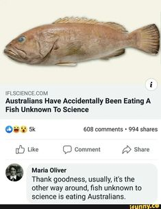 COM Australians Have Accidentally Been Eating A Fish Unknown To Science Like Comment Share [& D %> º Maria Oliver Thank goodness, usually, it's the other way around, fish unknown to science is eating Australians. Stupid Funny Memes, Funny Relatable Memes, Funny Posts, Funny Quotes, Hilarious, Funny Stuff, Random Stuff, Biology Memes, Science Memes