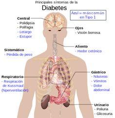 Diabetes. La diabetes es una afección clínica-patológica consistente en la destrucción por parte del sistema inmunológico de las células beta del páncreas en los islotes de Langerhans, provocando esto una secreción insuficiente de insulina, la hormona que regula los niveles de glucosa (azúcar en la sangre).