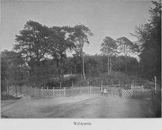 Schwarz-Weiß-Foto: mehrere Bäume