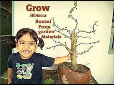 How to Bonsai - Grow Hibiscus Bonsai from Garden materials