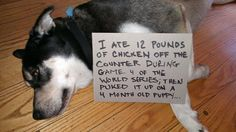 (You were only expressing an opinion about sports dear doggy. Feel no shame. We just don't have the stomach for the job.) Most Popular Dog Shaming Shenanigans For Their Crimes Funny Dogs, Cute Dogs, Funny Animals, Cute Animals, Baby Animals, Teach Dog Tricks, Dog Shaming, Public Shaming, Funny Cat Compilation