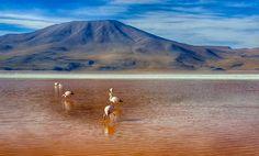 O Salar de Uyuni, localizado no sudoeste da Bolívia, perto da fronteira com o Chile e do deserto do Atacama, é o maior deserto de sal do mundo. São mais …