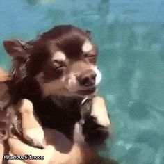 The silliest swimming dog. | The 15 Most Delightful GIFs Of 2013----- Savvy's not the only one- just the cutest!