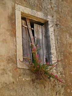 Old window shutters now house a plant. Would be great to see each of these buildings on Korcula returned to their beauty.