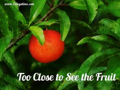 We must trust that when we are legitimately tapped into the Root, that He WILL (eventually) produce fruit.