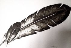 Eagle Feathers Drawing by Priscilla Lopez