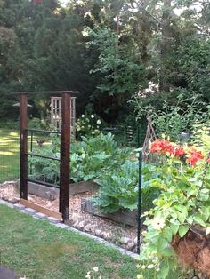 The vegetable garden with deer fencing around it or dog Now if