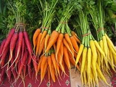 ~ colourful carrots ~