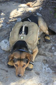 Backpacking buddy. Good guy owner protects dogs feet while hiking rocky terrain. This is the only time dog clothing is acceptable.