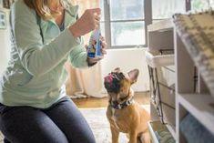 DIY Dog Ramp for the Bed | HGTV Dog Steps For Bed, Wooden Ramp, I Can Haz, Pet Ramp, Pet Stairs, Diy Dog Bed, Smart Storage, Getting Old, Hgtv