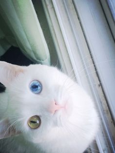 cat has the nicest eyes...
