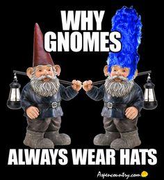 f3e8c550efb40f9a0efe997db36613b1 i'm a true gnome nonsense meme! gnomes etc pinterest