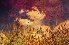 Wheat Field Dream -Original fine art color landscape, dreamscape photography by Bob Orsillo.  Copyright (c)Bob Orsillo / http://orsillo.com - All Rights Reserved.  Buy art online.  Buy photography online  Dreamscape landscape art and photography at www.boborsillo.com