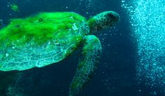 Marine Conservation, Wildlife Conservation, World Wildlife Federation, Endangered Species, Animals, Projects, Blog, Image, Organizations