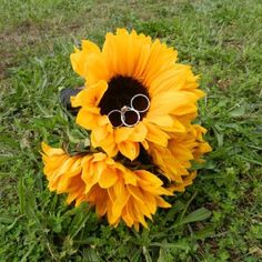 Sunflower with wedding and engagement rings! Wedding photo idea