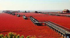 Lugares Fantásticos: Praia Vermelha - Panjin – China