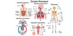 corpo humano inteiro orgãos - Pesquisa Google