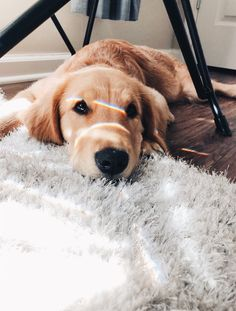 Dog And Puppies Happy .Dog And Puppies Happy Cute Baby Animals, Animals And Pets, Funny Animals, Cute Dogs And Puppies, Baby Dogs, Doggies, Cute Dog Wallpaper, Cute Animal Photos, Tier Fotos