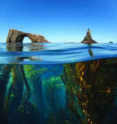 Diving National Parks ... Anacapa Island, photographed by Antonio Busiello