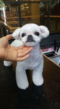 Summer haircut for Shiro