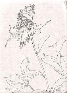 Beautiful Chinese Peony sketch. Kutsuna Hiromi.