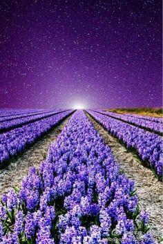 Purple Love, All Things Purple, Shades Of Purple, Purple Flowers, Purple Sky, Hyacinth Flowers, Purple Tips, Lavender Fields France, Beautiful World