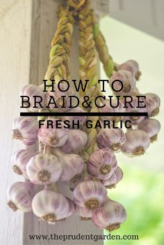 How to braid and cure fresh garlic-- TRY THIS IN 2017