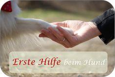 Erste Hilfe bei unseren Hunden ist genau so wichtig wie bei Menschen! Sheltie, Holding Hands, First Aid Course, Dog Training, Knowledge, People, Hand In Hand