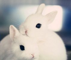 Adorable Pair of Baby Bunnies | Cute Baby Bunny Rabbits | Angelic Animal Faces