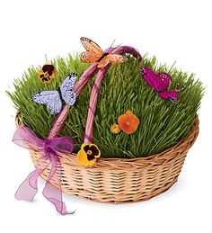 I betting I could make these for the bookshelf. (Grow your own grass Easter basket at HearthSong - FUN!)
