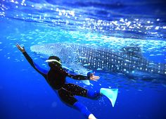 Swim with whalesharks- Ningaloo Reef. Has been number one on my things to do in Asia list for two years now. Can do it in Thailand, Sri Lanka, Maldives, Australia...