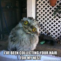 obsessed owl