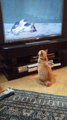 Marco watch cat TV