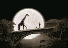 i want a giraffe as a pet