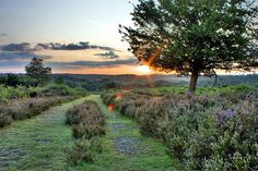 The New Forest - Dorset, England
