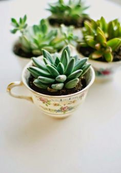 Life as a Thrifter: Wednesday Redo: Succulants & Vintage Tea Cups