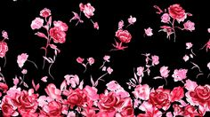 Beautiful Pictures Of Roses wallpaper